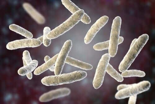 Bacterie in de darmflora