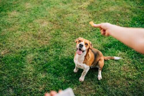 Hond krijgt een snoepje