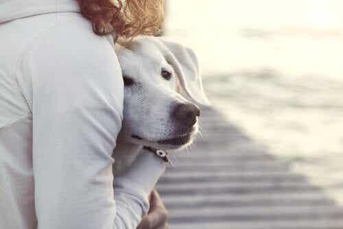 Heeft je hond een hekel aan bezoek? Bekijk deze tips!