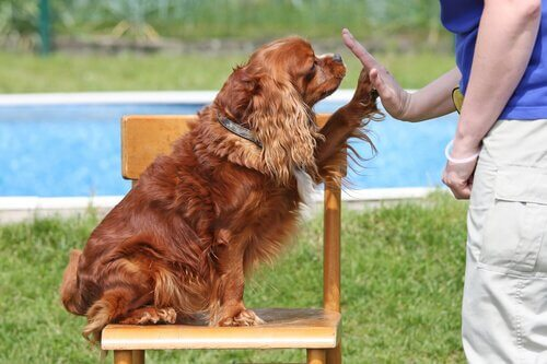 Een hond zit op een stoel