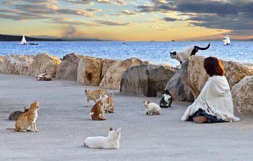 Moeten kattenkolonies worden gecontroleerd?