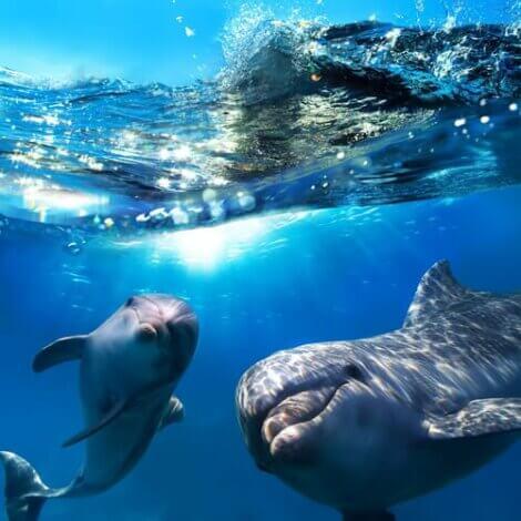 Twee dolfijnen onder water
