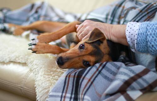 Een zieke hond wordt geknuffeld