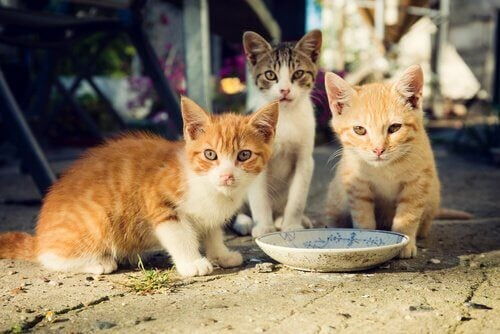 Jong zwerfkatten eten uit een schaaltje