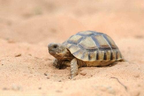 De fascinerende wereld van schildpadden in Spanje
