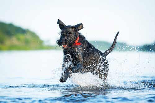 De tien meest atletische hondenrassen