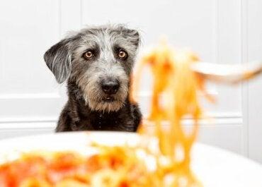 Mogen honden pasta eten?