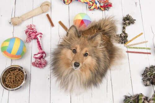 Tips om huisdieren tijdens de coronaviruscrisis te vermaken