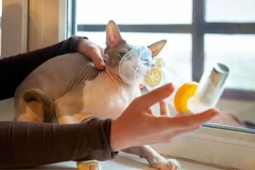 Symptomen van ademhalingsproblemen bij katten