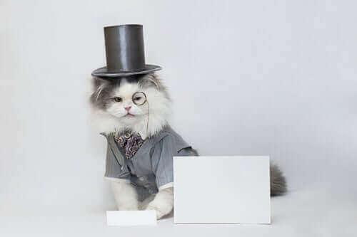 Kat met een hoge hoed op