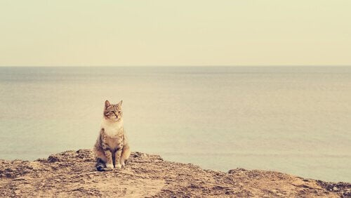 Kat op een rots bij de zee