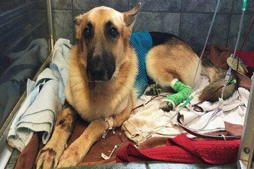 Een hond in het dierenziekenhuis