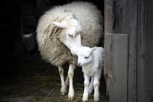 Dieren hebben een indrukwekkend moederinstinct
