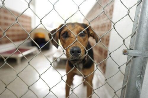 Hond achter een hek