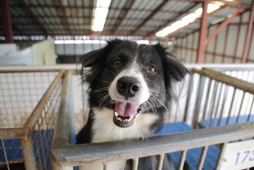 Een achtergelaten hond adopteren: dingen om te overwegen