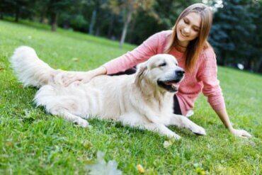 Kalmerende signalen voor het trainen van een hond