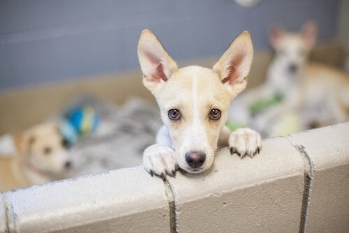 Pup achter een muur