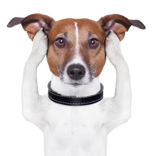 Hond houdt zijn pootjes tegen zijn oren