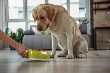 Waarom is er hondenvoer zonder granen?