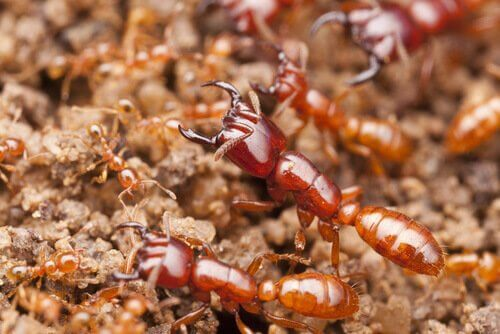 De meest dodelijke insecten ter wereld