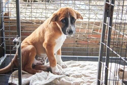 Een puppy in een bench