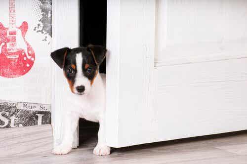Help je puppy aan zijn nieuwe huis te wennen
