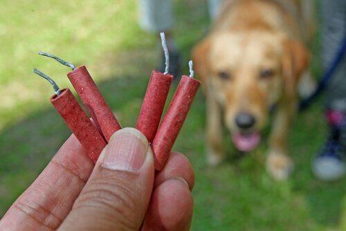 Een hond met vuurwerk