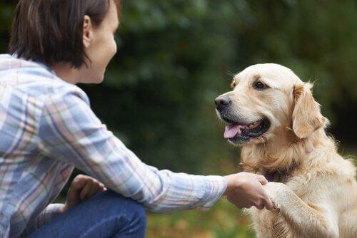 Vrouw laat haar hond een poot geven