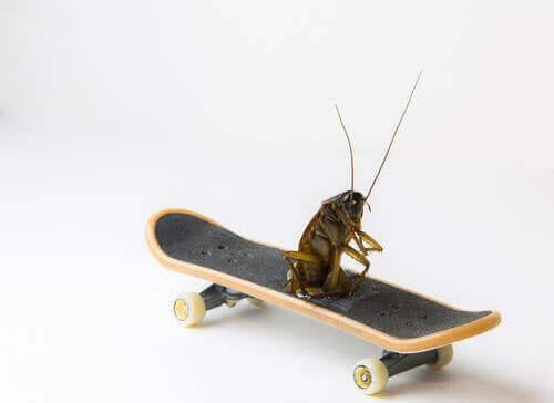 Zijn kakkerlakken de oudste insecten?