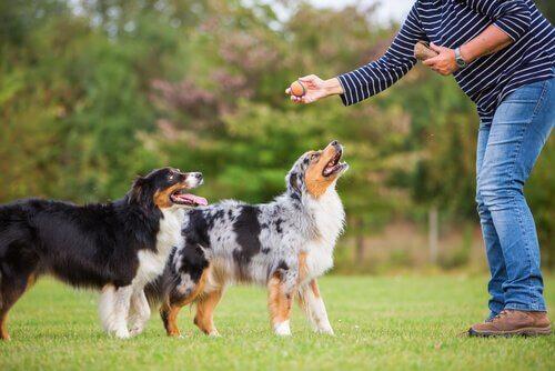 Honden krijgen training