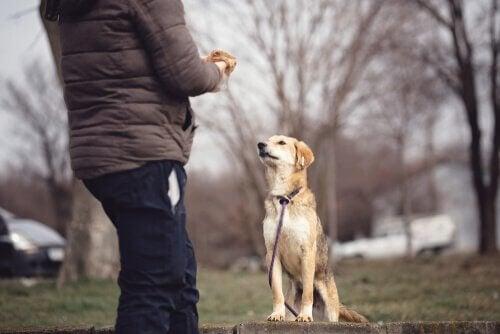 Psychologie van de hond: alles dat je moet weten