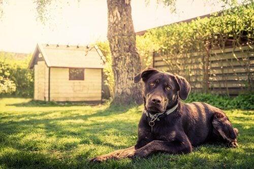 14 tips voor het bouwen van een hondenhok