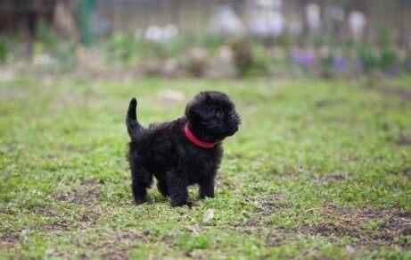 Een zwarte puppy in het bos