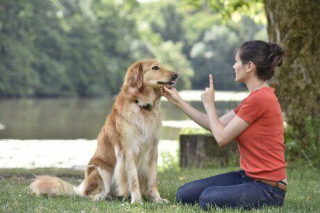 Een vrouw traint een hond in het park