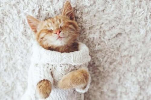 Waarom katten niet van de kou houden