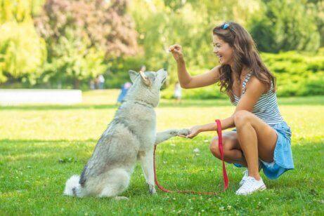 Een vrouw geeft haar hond een snoepje
