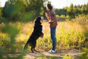 Hond krijgt training