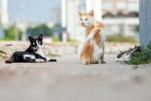 Zwerfkatten op straat