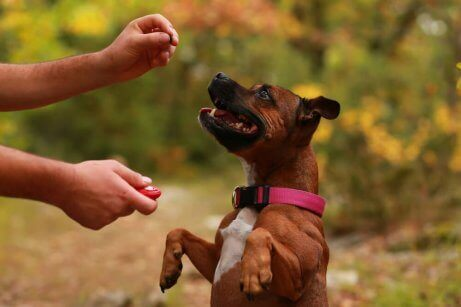 Clickertraining met een hond