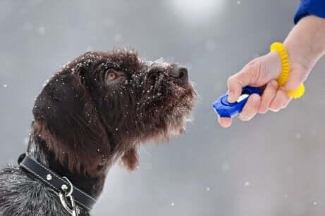 Een kleine hond met een clicker