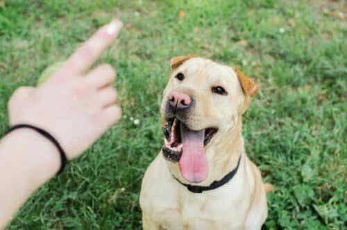 Hondentrainingsprogramma's: onder verdenking