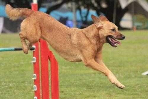 Tips om je hond mee te nemen naar wedstrijden