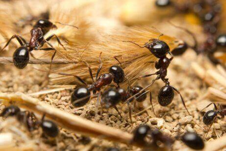 Een groepje mieren in het bos