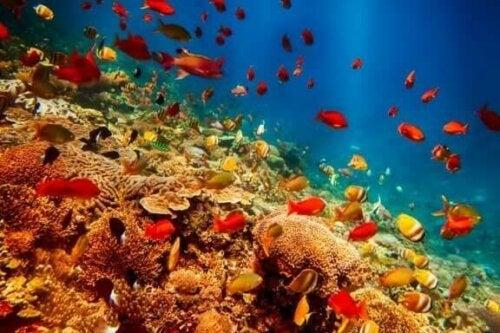 8 van de vreemdste zeedieren om je over te verbazen