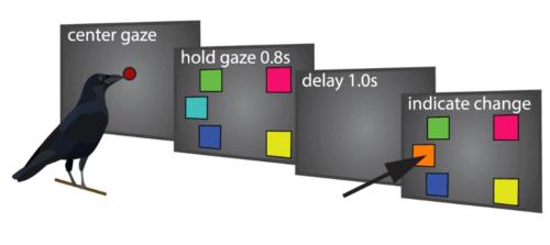 Test met schermen