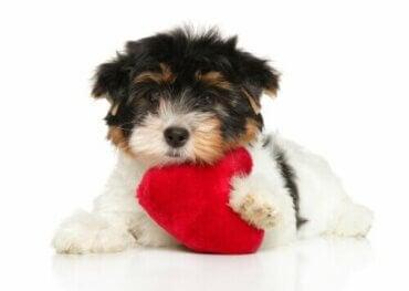 Zes tips om voor het hart van je hond te zorgen