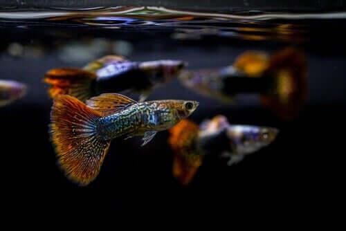 Het belang van de pH van een aquarium