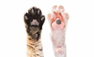 Interessante feiten over de voetkussentjes van dieren