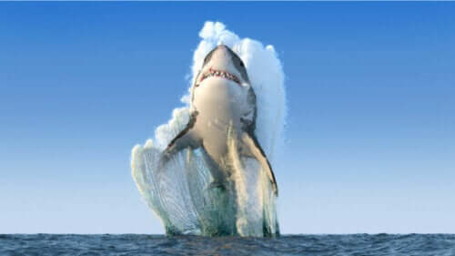 Is het waar dat haaien niet ziek worden?