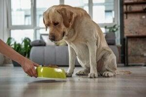 Hoog cholesterolgehalte bij huisdieren: wat te doen?